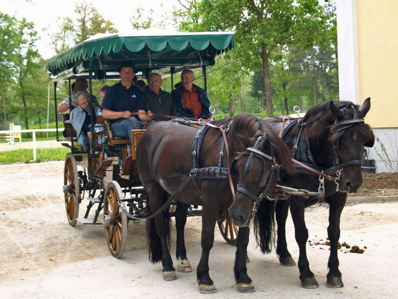 Horseback riding | Carriage rides